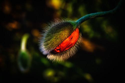 FA__7206-Edit